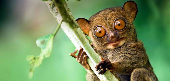 Tarsier Bohol Tourist attraction